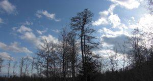Inv.Vee anténa na strome